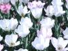 parc floral vac avril 20170025 (54)