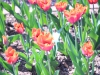 parc floral vac avril 20170025 (55)