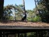 parc floral vac avril 20170025 (68)